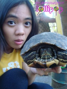 with tortoise